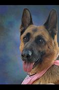 Belle von der Pelzmühle, Procedural Enforcement